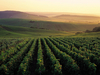 World famous vineyards