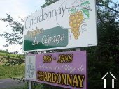 Chardonnay village over a millenium