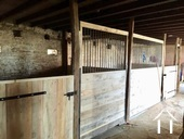 2 ruime paardenboxen voor merrie met veulen