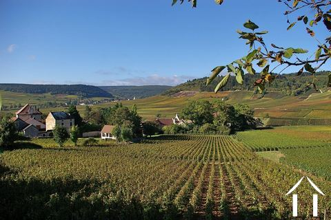 Burgundy information